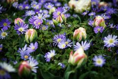 Jardín de flores hermoso con las flores florecientes coloridas Fotos de archivo