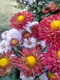 Jardín de flores hermoso en ludhiana Imagen de archivo