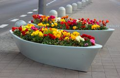 Jardín de flores de la calle imagen de archivo libre de regalías