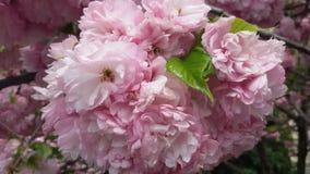 Jardín de flores rosado Imagen de archivo libre de regalías