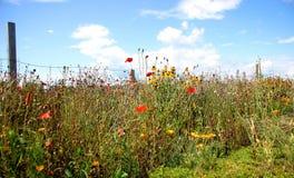 Jardín de flores salvajes   Imágenes de archivo libres de regalías