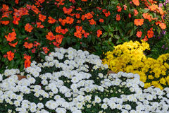 Jardín de flores vivo Imagenes de archivo