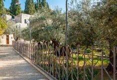 Jardín de Gethsemane Imagen de archivo