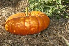 """jardín de Halloween del ¿del ï"""" de la acción de gracias de las calabazas en octubre Foto de archivo libre de regalías"""