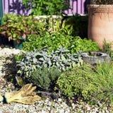 Jardín de hierba Imagenes de archivo