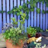 Jardín de hierba Imágenes de archivo libres de regalías