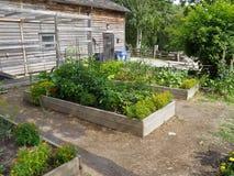 Jardín de hierba Fotografía de archivo libre de regalías