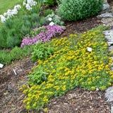 Jardín de hierba Foto de archivo libre de regalías