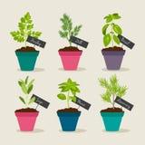 Jardín de hierbas con los potes de herbsn Imagen de archivo libre de regalías
