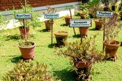 Jardín de hierbas de Ayurvedic imagenes de archivo