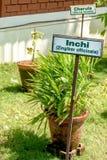 Jardín de hierbas de Ayurvedic imágenes de archivo libres de regalías