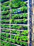 Jardín de hierbas vertical Imagen de archivo libre de regalías