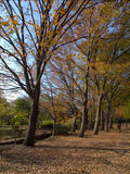 Jardín de Japón Fotos de archivo