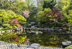 Jardín de Kyoto Imagenes de archivo