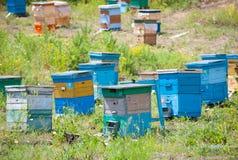 Jardín de la abeja Fotografía de archivo libre de regalías