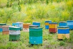 Jardín de la abeja en Siberia Fotos de archivo libres de regalías