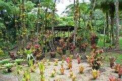 Jardín de la balata, Martinica Foto de archivo