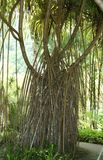 Jardín de la balata, Martinica Imágenes de archivo libres de regalías