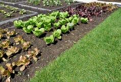 Jardín de la ensalada Foto de archivo libre de regalías