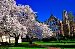 Jardín de la flor de cerezo delante de edificios imperiales de la arquitectura foto de archivo libre de regalías