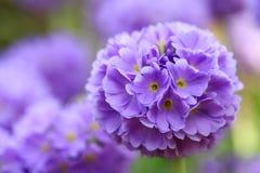 Jardín de la floración de la flor Fotografía de archivo