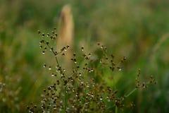 Jardín de la hierba foto de archivo libre de regalías