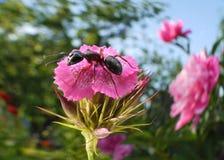 Jardín de la hormiga Imagen de archivo libre de regalías