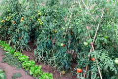 Jardín de la horticultura imagen de archivo libre de regalías