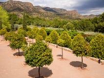 Jardín de la huerta del árbol anaranjado en España Imágenes de archivo libres de regalías