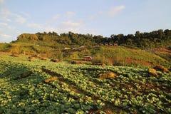 Jardín de la lechuga Foto de archivo libre de regalías