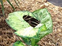 Jardín de la mariposa Fotos de archivo