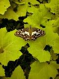 Jardín de la naturaleza de la hoja de la monzón de la mariposa Fotos de archivo libres de regalías