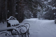 Jardín de la nieve Foto de archivo libre de regalías