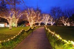 Jardín de la noche Imagen de archivo libre de regalías