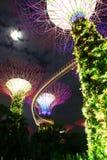 Jardín de la noche por la bahía tree6 Imagen de archivo libre de regalías
