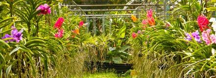 Jardín de la orquídea imágenes de archivo libres de regalías