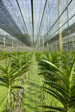Jardín de la orquídea Foto de archivo libre de regalías