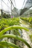 Jardín de la orquídea Imagenes de archivo