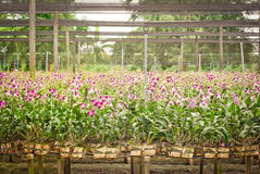 Jardín de la orquídea foto de archivo