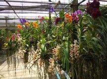 Jardín de la orquídea fotografía de archivo