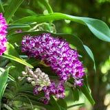 Jardín 02 de la orquídea Imagen de archivo