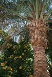 Jardín de la palma Fotografía de archivo libre de regalías