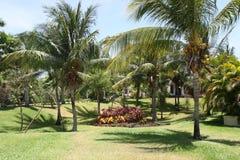 Jardín de la palma Imagenes de archivo