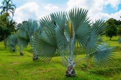 Jardín de la palma Imagen de archivo libre de regalías
