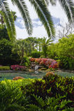 Jardín de la palma de la Florida Fotos de archivo