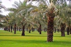 Jardín de la palmera Imágenes de archivo libres de regalías