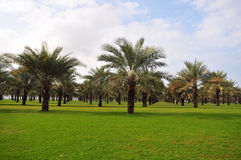 Jardín de la palmera Foto de archivo
