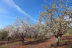 Jardín de la primavera fotos de archivo