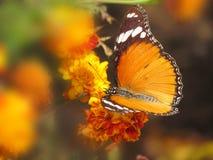 Jardín de la primavera de la fantasía Foto de archivo libre de regalías