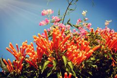 Jardín de la tarde del escenario del sol de las flores foto de archivo libre de regalías